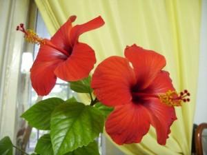 Комнатные растения для радости, любви и счастья