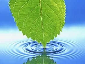 Значение-воды-для-растений